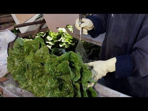 Romaine lettuce warning after E. coli outbreak
