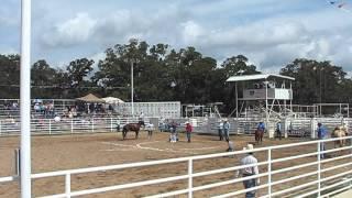 CT Cattle CO. Rodeo # 4 Branding Teague, TX