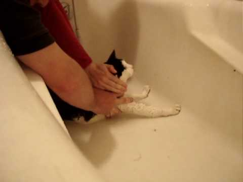 Funny Cat taking Bath