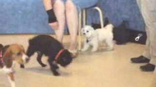 Annabella At Pet Smart's Dog Training Class: Video 4