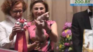 Лучший котенок Беларуси 2011. 1 место