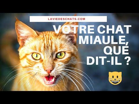 Quand Votre Chat Miaule Comme ça, Que Dit-il ? 🐱