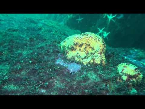 Punta de Choros - Patrimonio Submarino Histórico y Natural de Chile