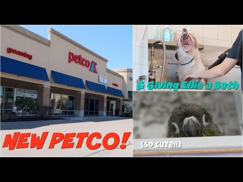 GIVING MY DOG A BATH (and going to the new Petco)