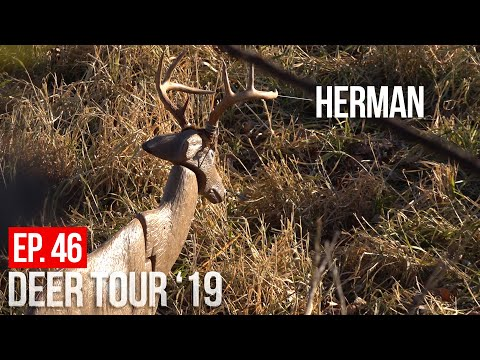 HUNTING A SMALL PUBLIC AREA With HERMAN (our Deer Decoy!)  - Iowa Public Land