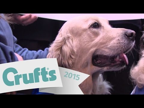 The Kennel Club Cancer Centre at the Animal Health Trust | Crufts 2015