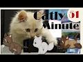 Spielzeugdieb - Catly Minute - 51 - mit Miri