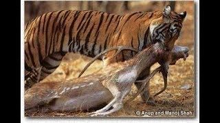 Nat Geo Wild: Охота больших кошек