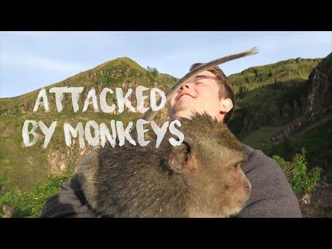 ATTACKED BY MONKEYS - MT. BATUR, BALI
