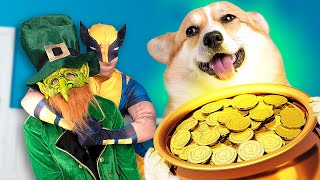 Happy Dog And Wolverine VS Leprechaun Chase