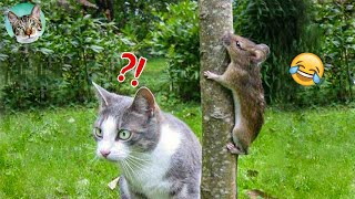 Try Not To Laugh Cat Vs Mouse Funny Animals Reaction Videos| Amazing Animals