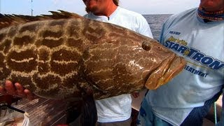 Tortuga Bank - SNAPPER and GROUPER in the Dry Tortugas