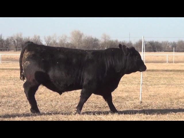 Express Ranches Lot 55