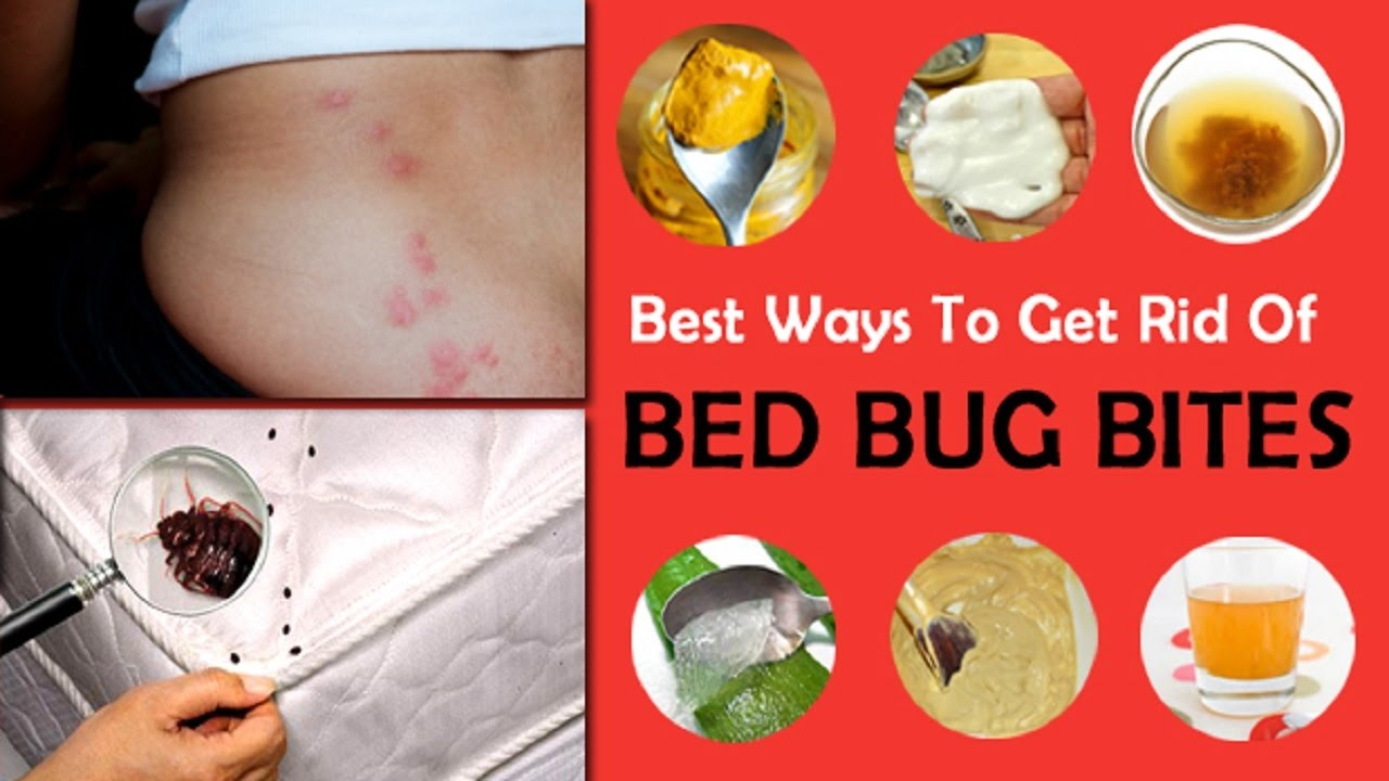 How To Treat Bed Bug Bites On Dogs