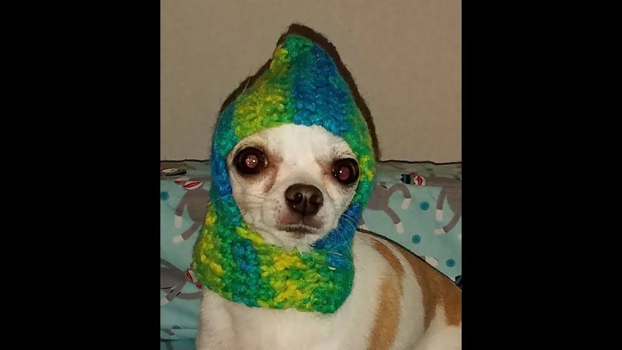 Crochet Chihuahua Hat Tutorial How To Crochet a Dog Hat - YouTube 7805af4fef9