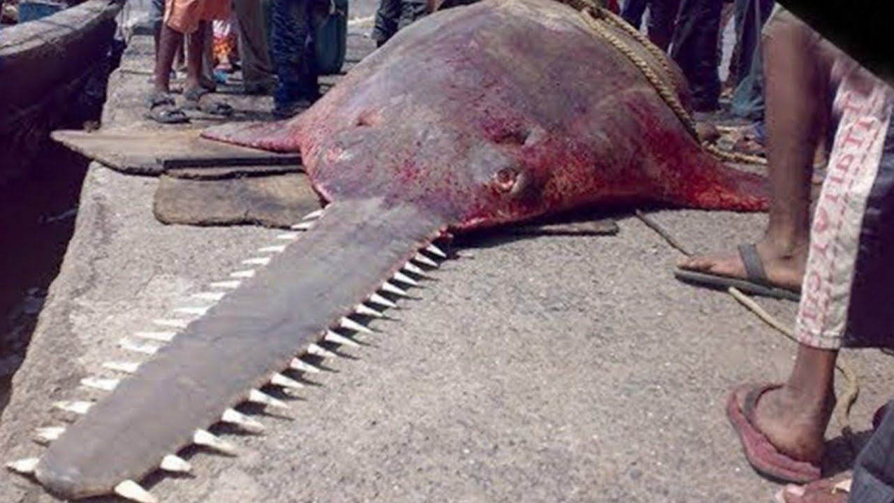 Der Gefährlichste Fisch Der Welt