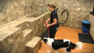 Pet Valu's Dog Wash