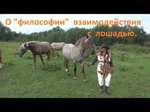 Бёрдмэн (2014) — КиноПоиск