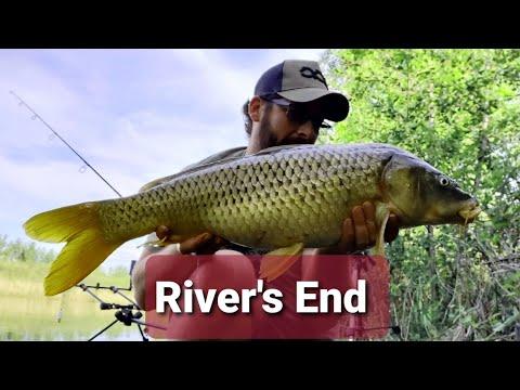 Carp Fishing At River's End