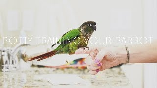 Conure Parrot Potty Training