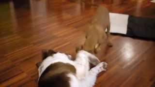 Dlaczego warto zabierać psy na imprezy :) Kira 6 months https://www...