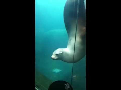 Retarded Sea Lion Youtube