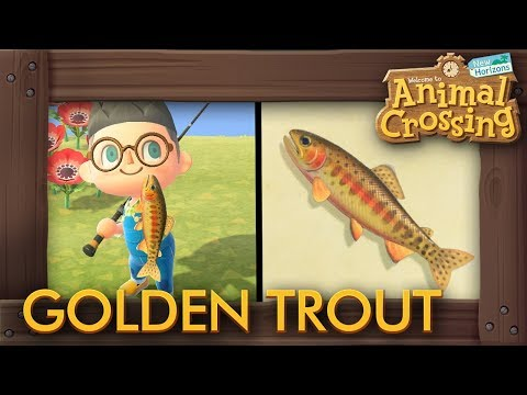 Animal Crossing: New Horizons - How To Catch Golden Trout (New 15,000 Bells Fish)