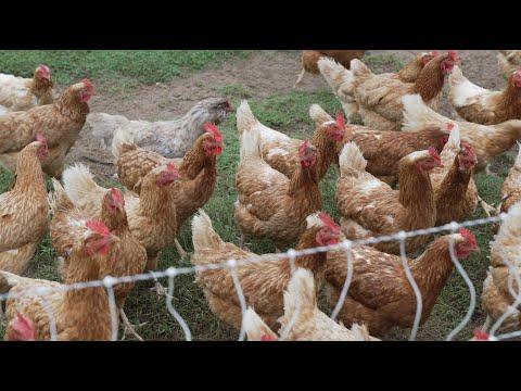 Cathis Farm