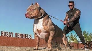 Эти Собаки Запрещены Во Всем Мире | Топ 8