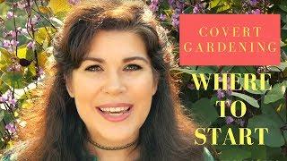 How to Begin Covert Gardening - Hyacinth Bean Plant