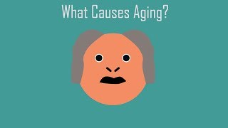 What Causes Aging?