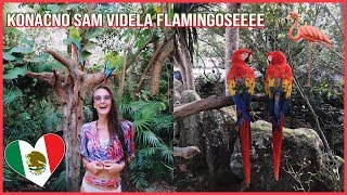 Ipak sam videla flamingose i plivala podzemnim rekama