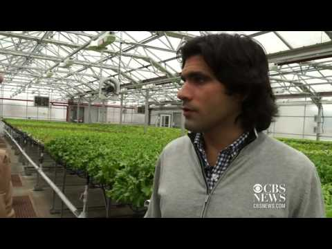 Rooftop farms  The farm of the future?