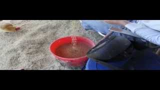 Winnowing Wheat - How To