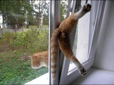 Смешные истории про котов и кошек: kot_de_azur