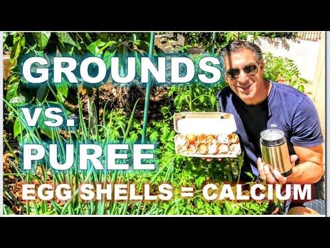 EGG SHELL PUREE vs. GROUNDS | TOMATO CARE--6 WEEK UPDATE | RADISH SALAD & DRESSING