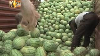 Download Video Farmers in Bura bank on watermelon farming MP3 3GP MP4