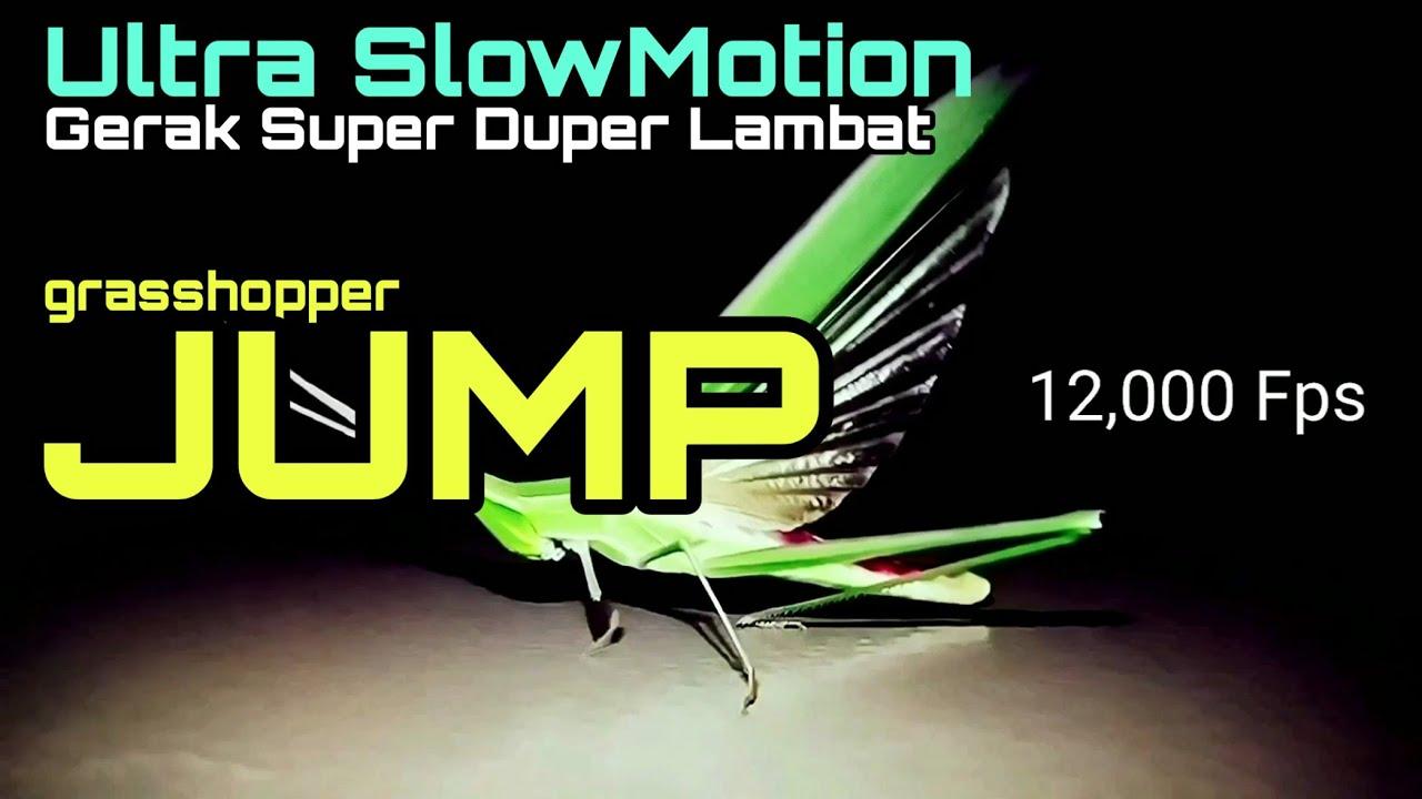 Download Akselarasi Awal Lompatan Belalang | Grasshopper Jump in Ultra Slow Motion Super Slower Fps FHD