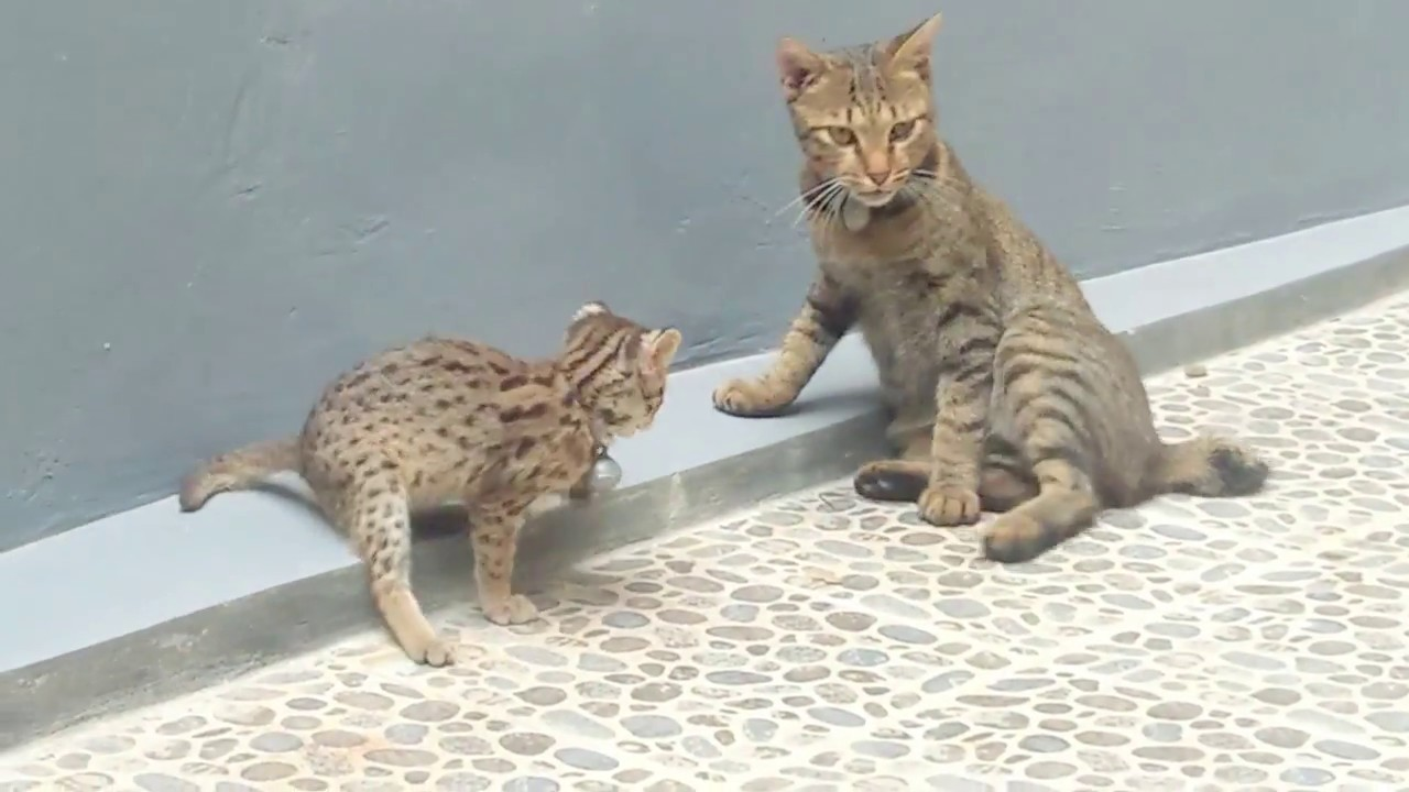 Download 94+  Gambar Kucing Liar Paling Lucu