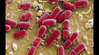 【一席】陳代傑:我們如何面對超級細菌