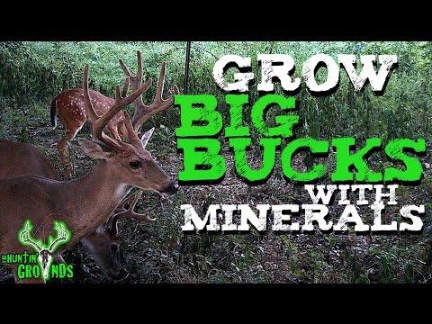 Grow Bigger Bucks, Easy Tip   S7 #17