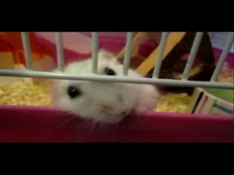 Is something wrong with my hamster? HELP*