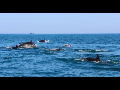 10 интересных фактов о Чёрном море