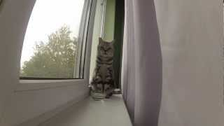 Котэ любит смотреть в окно