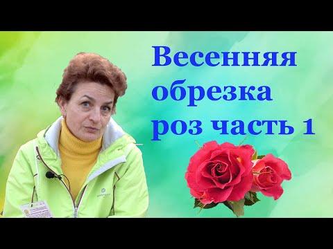 Вопрос: Полиантовая роза Боника 82, какие характеристики сорта?