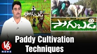 Paddy Crop cultivation techniques in Rabi Season by Senior Scientist Varma - V6 Sagubadi