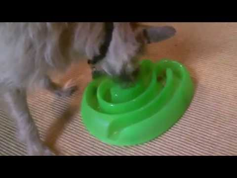 Buster Dog Maze. Turn dog treats into a game.