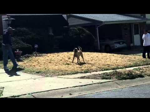 man fights dog off him
