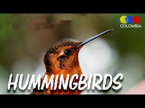 Feeding Hummingbirds in Colombia - Travel Vlog (2018)