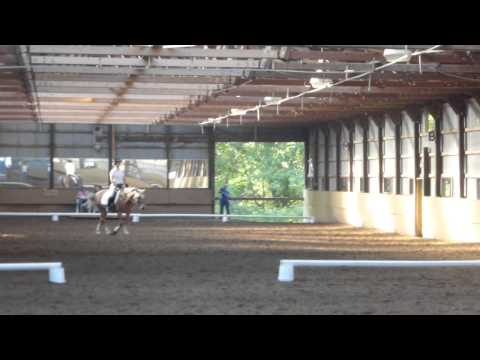 First Time - USDF Intro Level Test A